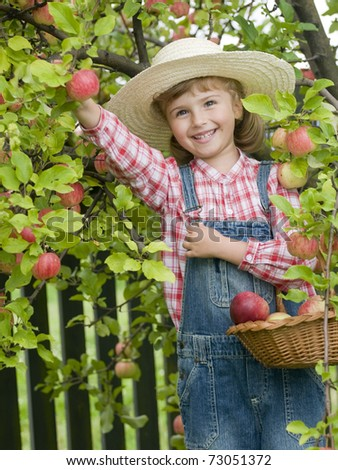 Apple harvest - little girl in apple orchard - stock photo