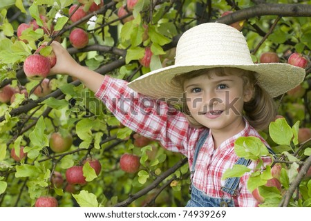 Apple harvest - little girl in apple orchard