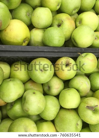 apple harvest. many apples. apples from the tree. autumn harvest with apples