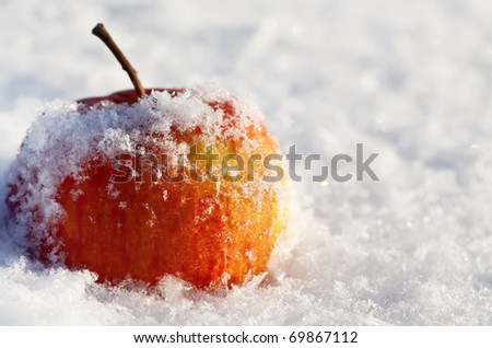 apple in to snow - stock photo