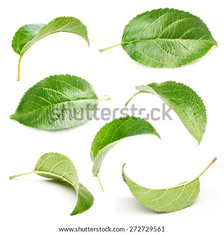 Apple leaves set isolated on white  - stock photo