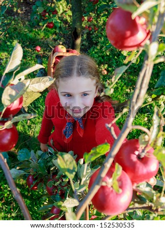 Apple orchard - cute girl picking red apples into the basket - stock photo