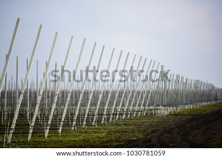 Apple Orchard Rows Winter