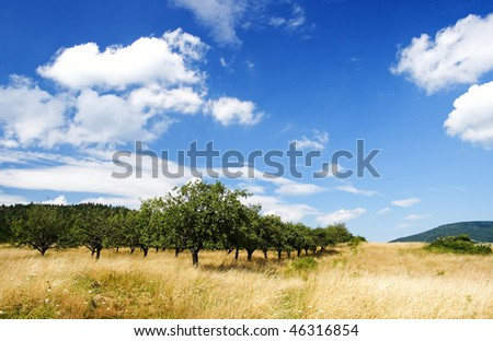 Apple Orchard under blue sky