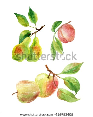 Apple, pear and peach branches with leaves and fruits. Watercolor apple, pear, peach fruits isolated on white background. Summer harvest. Fruit branch set. Hand drawn illustration - stock photo