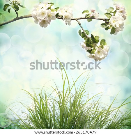 Apple tree blossoms and fresh green grass - stock photo