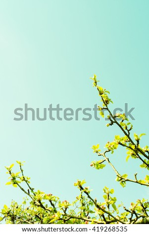 Apple tree branch with pink flowers against the sky - stock photo