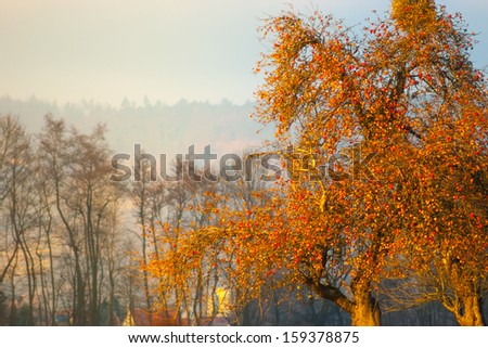 Apple tree in autumn, rich of fruit - stock photo
