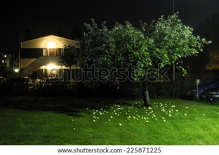 apple tree in the yard next to car parking at night, horizontal - stock photo