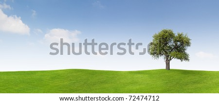 Apple tree on a meadow - stock photo