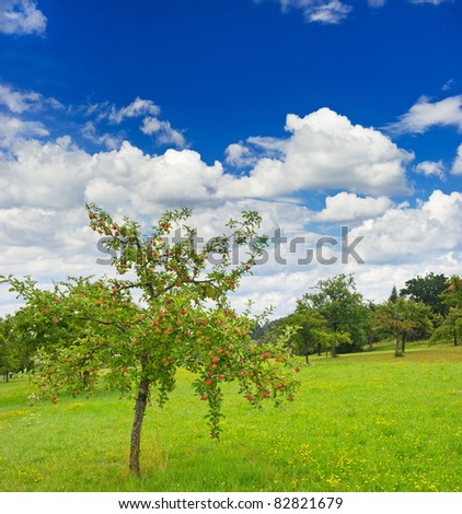 apple tree on cloudy blue sky background