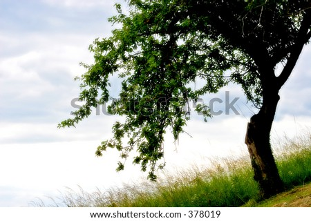 Apple tree with glow effect (soft filter). - stock photo