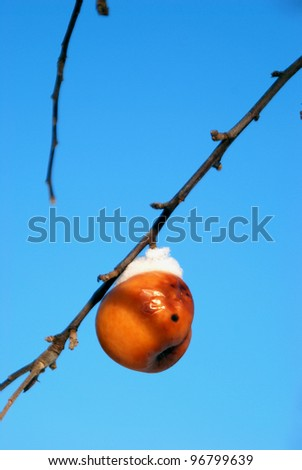 Apple tree with only one apple left in winter covered by snow - stock photo