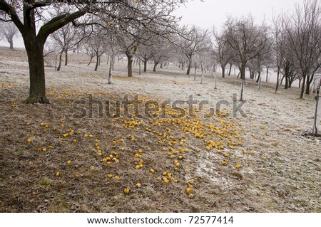 Apple trees freezing in the winter time - stock photo