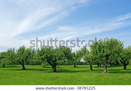 Apple trees on a green lawn under the blue sky. - stock photo