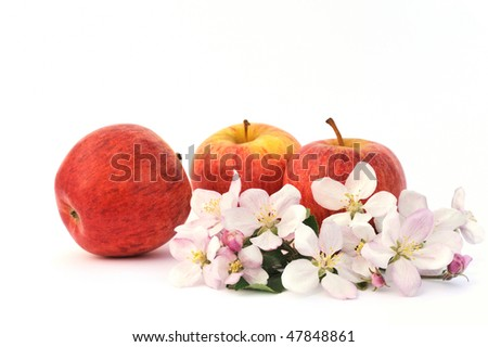 Apples and apple-tree blossoms - stock photo