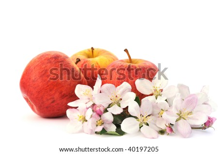 Apples and apple tree blossoms isolated on white background - still life - stock photo
