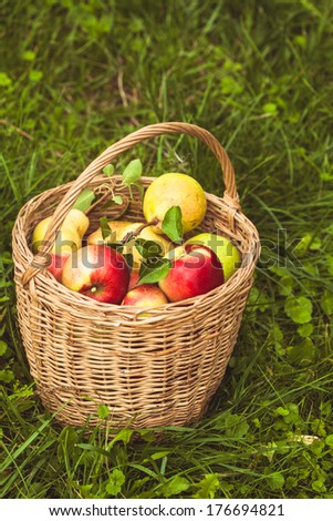 Apples and pears scattered from the basket on a grass in the garden