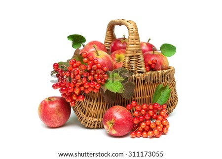apples and viburnum berries in a basket isolated on a white background. horizontal photo. - stock photo