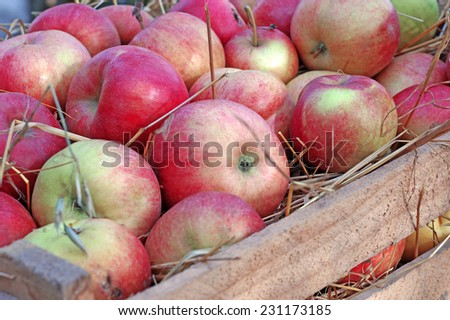 Apples closeup on straw in a wooden box closeup                                - stock photo