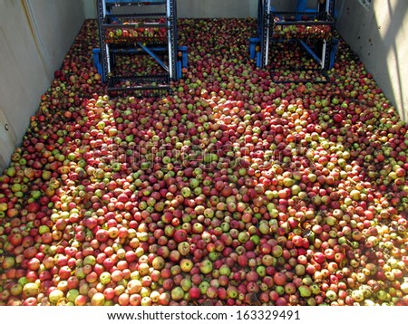 apples for processing into juice in the tank before cleaning the background