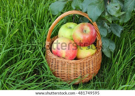 apples in a basket on the grass