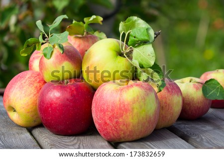Apples in a garden - stock photo