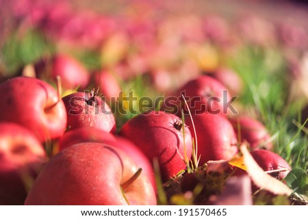 Apples lies on grass - stock photo