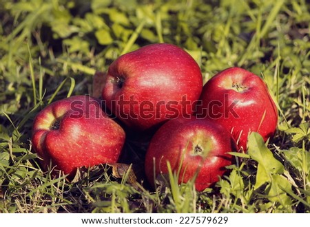 Apples lying in the grass - stock photo