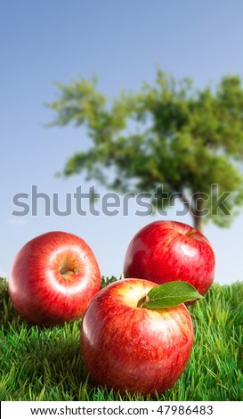 Apples on Grass with an apple tree in the background - stock photo