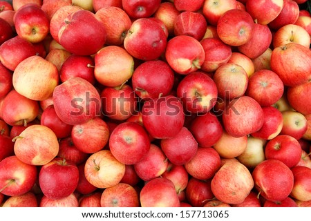 Apples / photography of red ripe apples