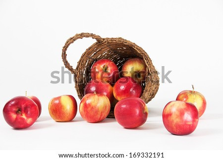 Apples spilled from the bucket photographed on a white background. - stock photo