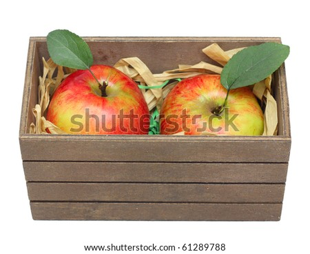 Apples with leaves. - stock photo
