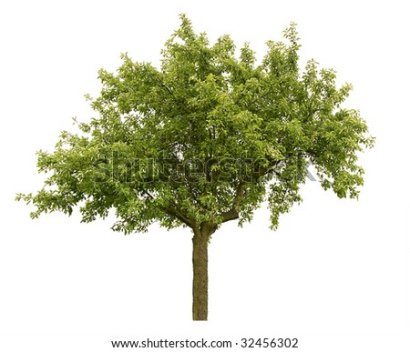 appletree isolated on white - stock photo