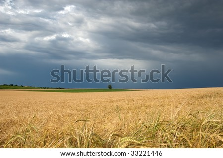 approaching thunderstorm over a wheat field