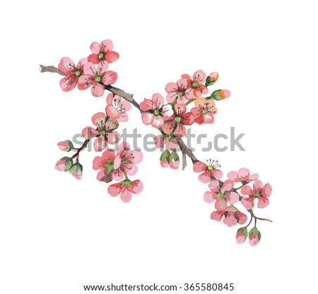 apricot flowers branch