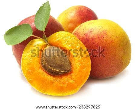Apricot fruit          - stock photo