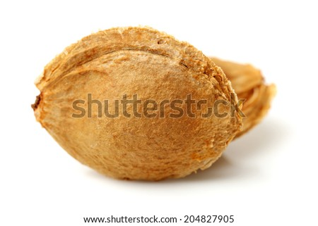 apricot kernel isolated on white background - stock photo