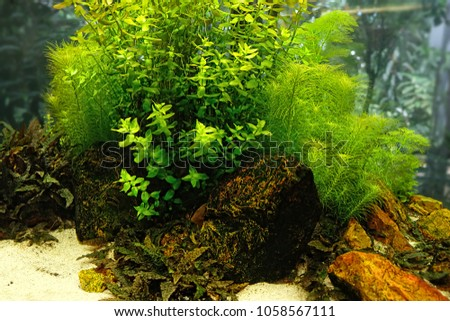 Aquarium Aquascape. Aquarium Plants. Landscape Design For The Aquarium.  Close Up.