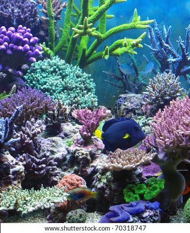 Aquarium corals reef marine aquarium - stock photo