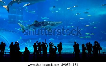 Aquarium in Okinawa city - stock photo