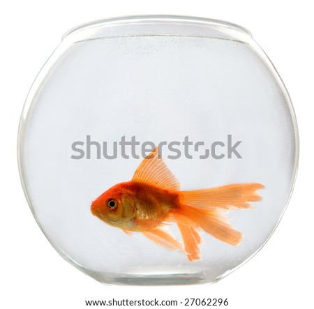 Aquarium on a white background with a goldfish - stock photo
