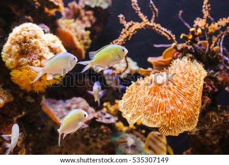 Aquarium with a fishes. Shalow deep field. Focus on central fish