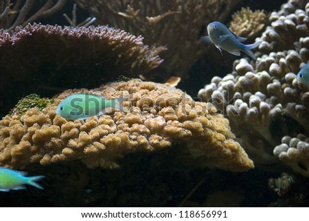 aquarium with colorful tropical fish and corals