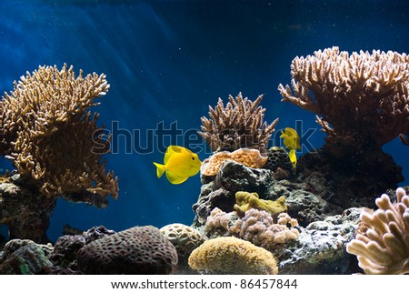 aquarium with colorful tropical fish and corals - stock photo
