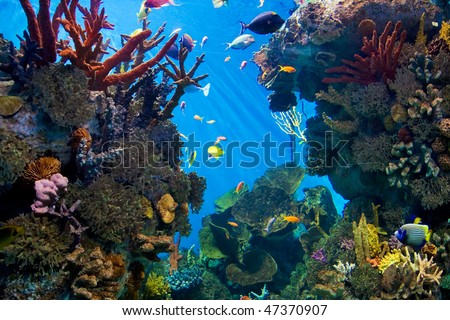 aquarium with fishes and reef - stock photo