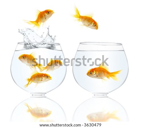 Aquarium with gold small fishes on a white background - stock photo