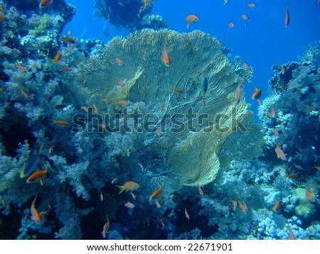 Aquatic Colony - stock photo