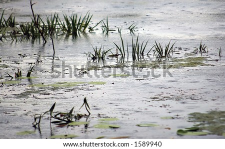 Aquatic plants and grey clouds reflecting in a marshland. - stock photo