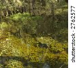 Aquatic plants in wetland of Everglades National Park, Florida, USA. - stock photo